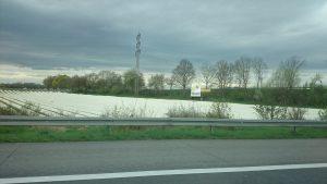 asparagus-field
